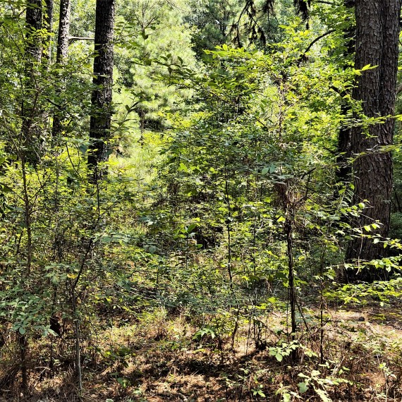 North Carolina: A hidden cemetery in the woods…